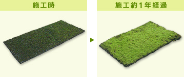 苔緑化【トモス緑化システム】